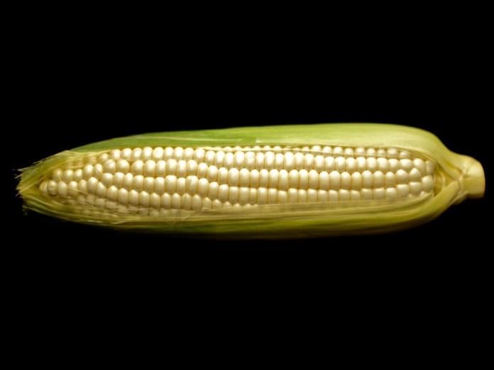 Delicious White Corn