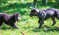 Puppy Head Start