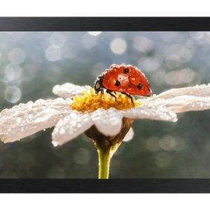 10 Led Small Format Display Full Hd Black 16/7 Usage Poe (power Ov