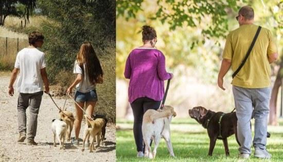 parejas paseando perros en el parque