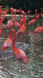 Flamingos inspiring good posture
