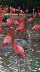 Flamingos inspiring good posture