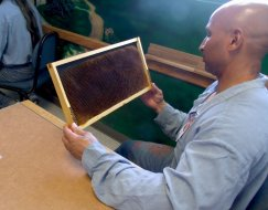 An SRCI inmate examines a frame from a honeybee hive during a lecture on bees. Members of the Treasure Valley Beekeepers Association followed up with a visit to the SRCI hives to show the inmates how to best care for their bees.