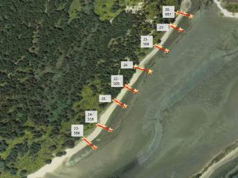 Aerial map of the monitoring transects in the unprotected stretch of beach.