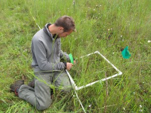 Connor measuring lupine cover at the Fitton Green experimental site