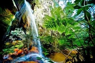 healthy-freshwater-ecosystem