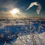 winterowl