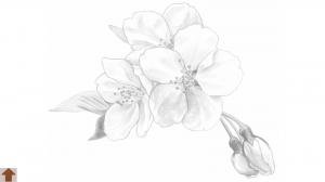 appliv】大人の塗り絵(花)