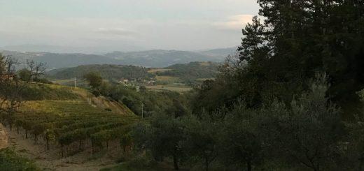 Wine Tasting in Tuscany (via Siena)