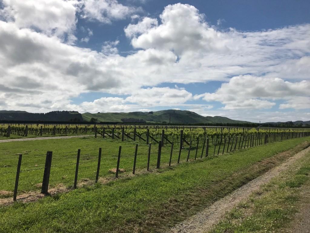Martinborough Vines
