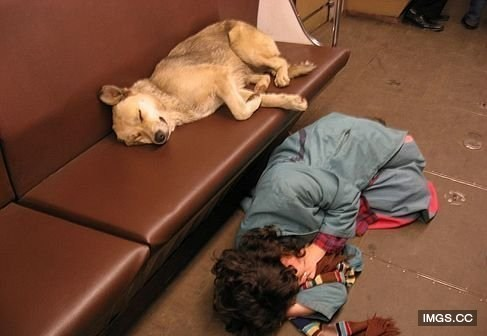 莫斯科野狗找不到食物 搭地鐵去流浪 - 寵物智慧王