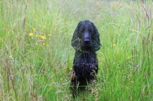 Belöna RIKLIGT när hunden satt sig på avstånd!