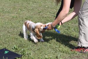 Vi lär valpen att älska att leka med oss