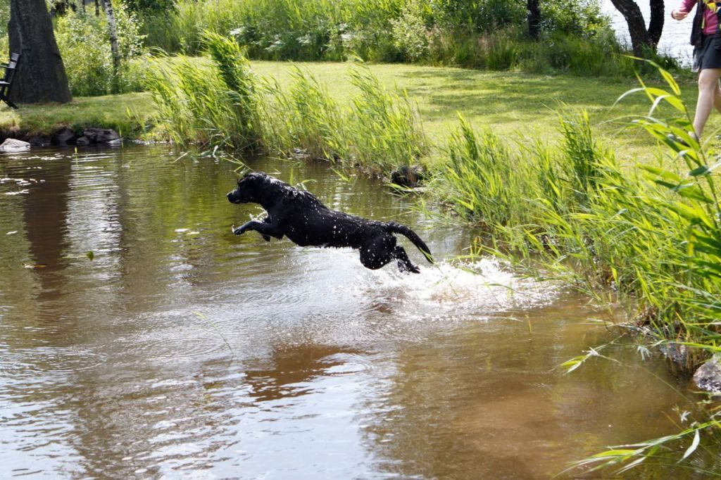 Some of the dogs really enjoyed the water training…