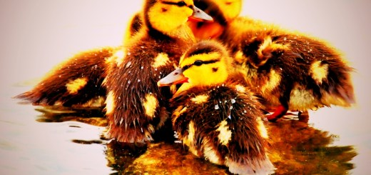 Appraisers Are Sitting Ducks to Random Legislation