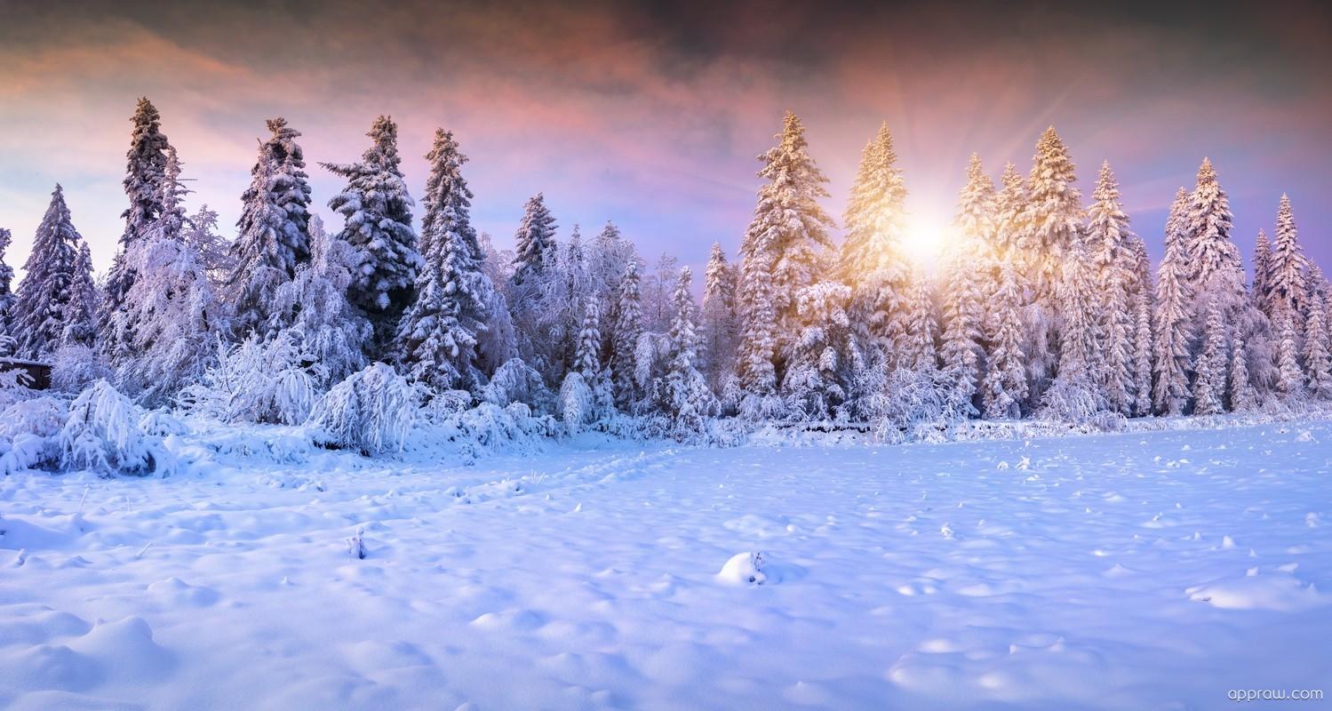 Pinterest Winter Wallpaper Gallery Wallpaper And Free
