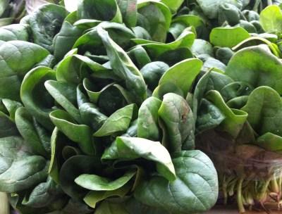 feuilles-épinards-frais-de-saison-du-marché