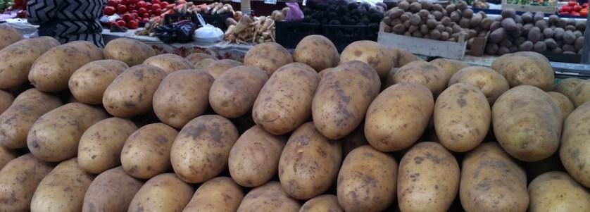 saison-des-pommes-de-terre-nouvelles