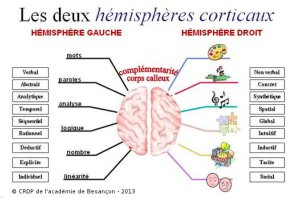 hemispheres du cerveau