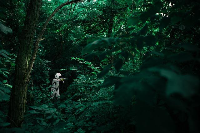 eldorado immobilier jungle