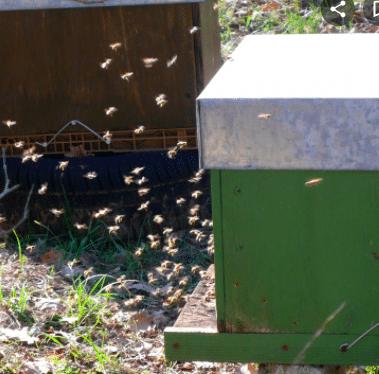 soleil d'artifice des abeilles