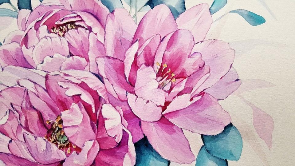 Peinture à l'aquarelle représentant des pivoines