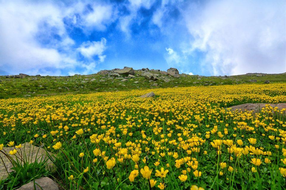 Prairie fleurie et rochers