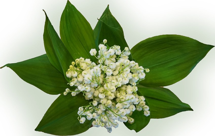 Muguet 1er Mai Mariage Kate Et William Bouquet Mariee