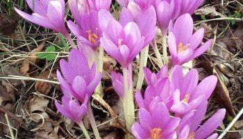 Langage Cache Des Fleurs Quel Bouquet Insulte T Il Le Plus Efficacement