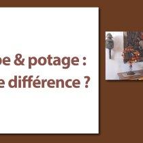 Quelle est la différence entre la soupe et le potage ?