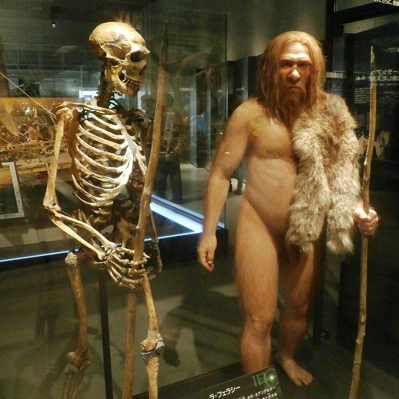 Restauration de l'homme de néanderthal