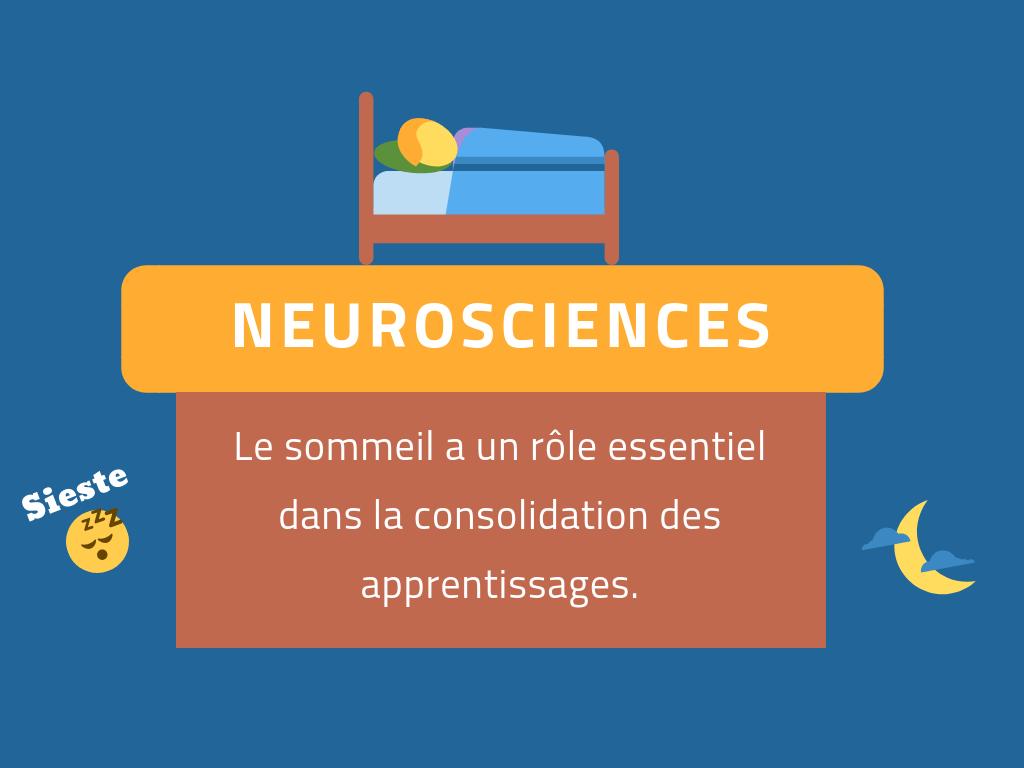 sommeil neurosciences apprendre