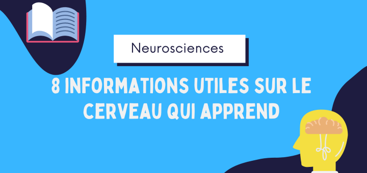 Neurosciences informations cerveau qui apprend.png