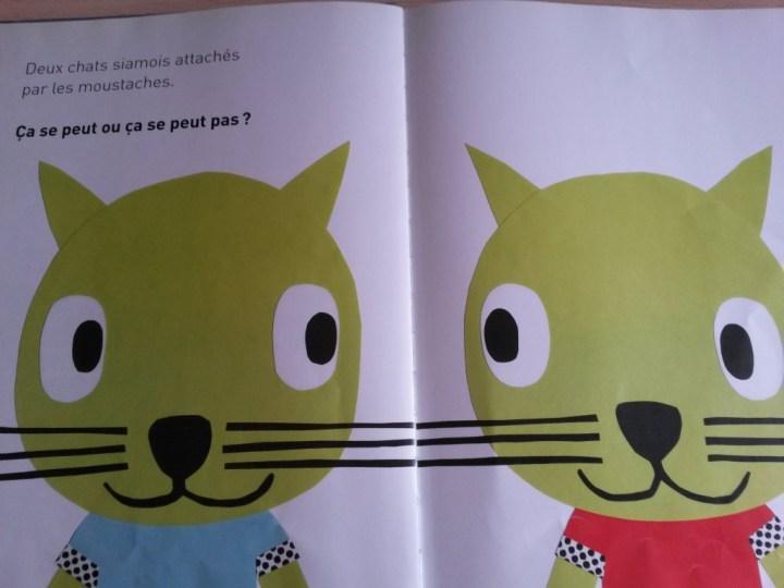 ça se peut ou ça se peut pas les chats siamois