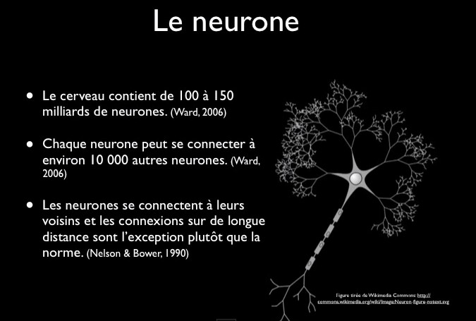 le neurone neuroséducation