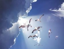 Birds of a feather flock together : Origine