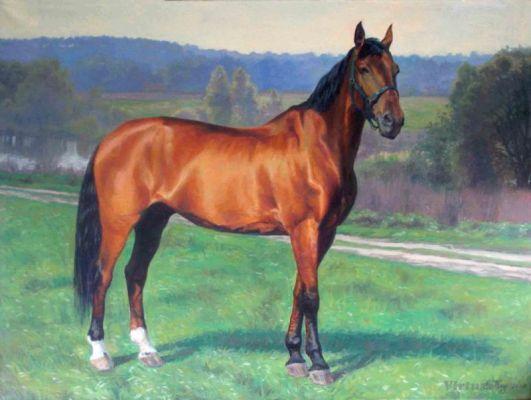 Surprise. Priap. Portrait d'un cheval sportif. 70x90 Huile sur toile