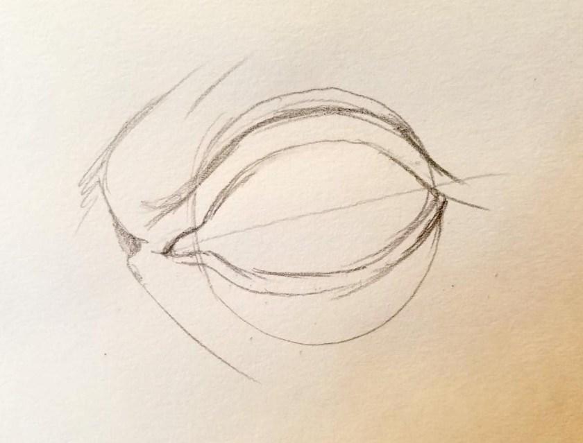 Comment dessiner des yeux. Les paupières.