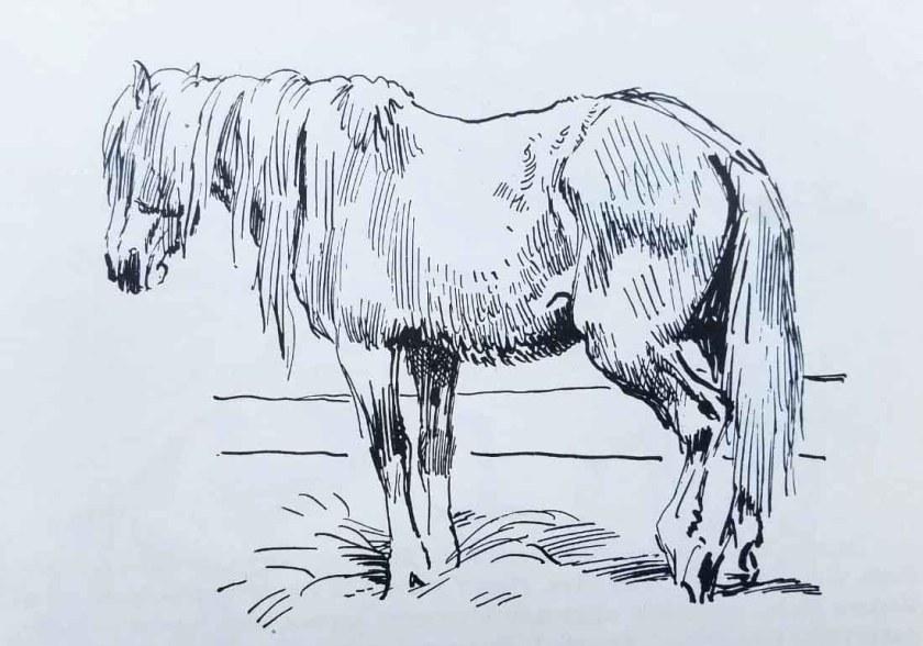 Apprendre à dessiner un cheval. Le repos en position debout