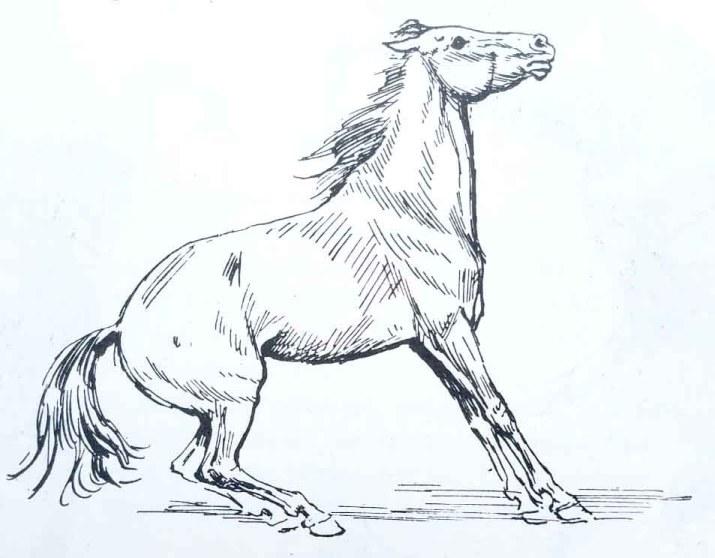 Le cheval freine. Apprenndre à dessiner un cheval