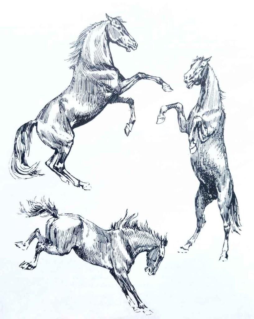 Le cheval se cabre. Apprendre à dessiner un cheval