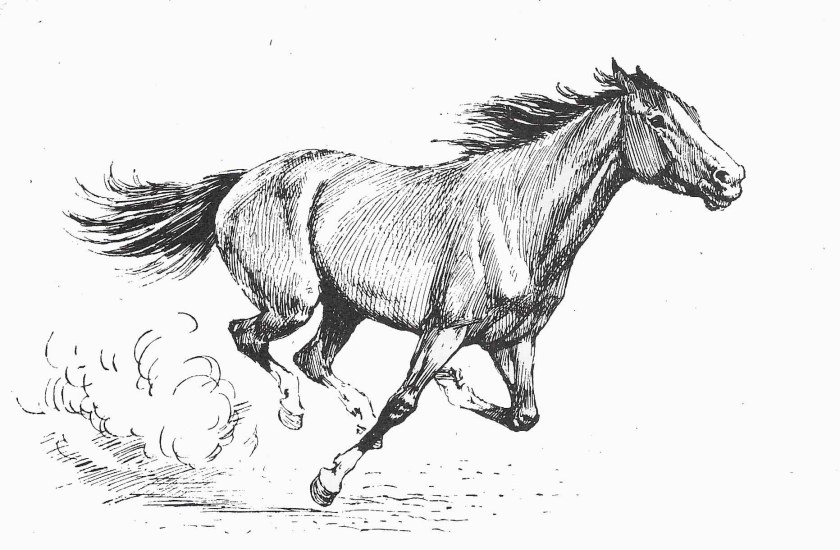 Cheval au galop. Comment dessiner un cheval