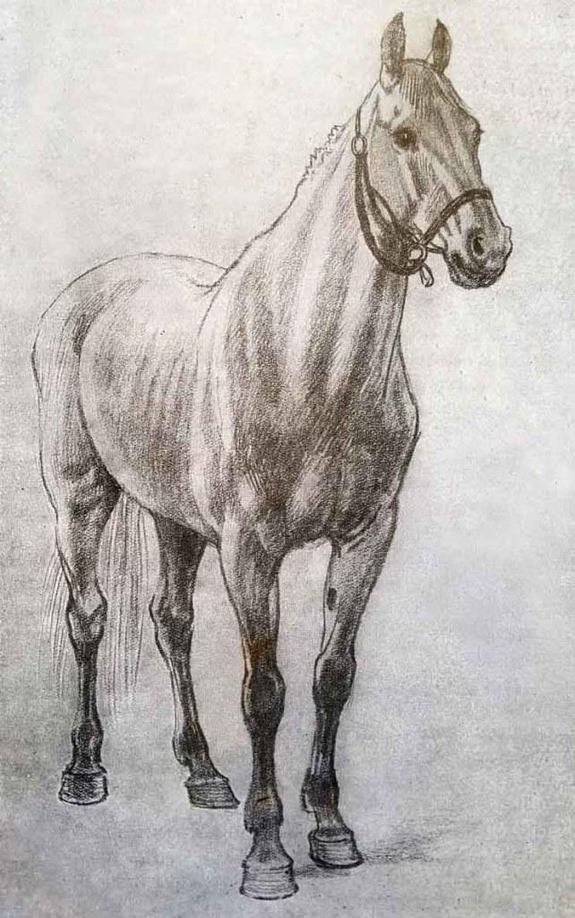 Comment dessiner un cheval. Etape finale