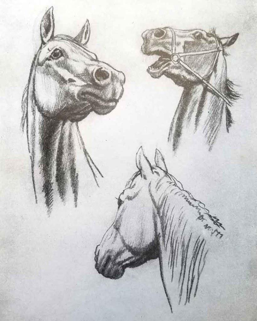 La tête du cheval. Comment dessiner un cheval