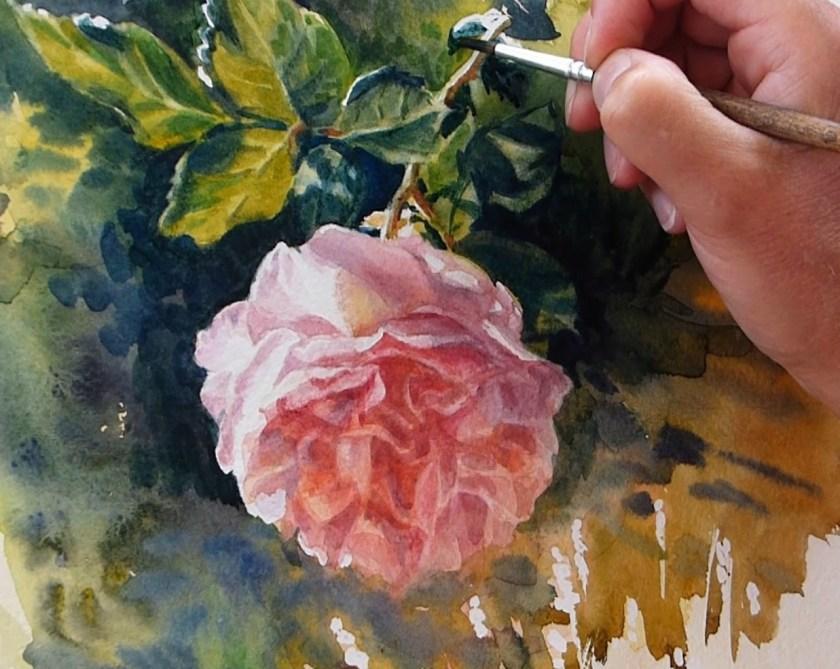 Les ombres sur les feuille de la rose