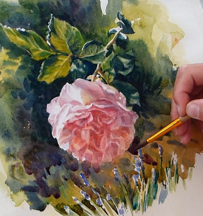 Les ombres sur le fond de la rose