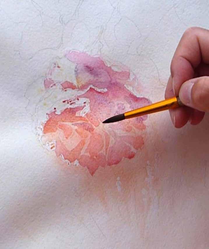 Peindre une rose. Les pétales