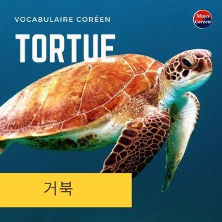 1-tortue