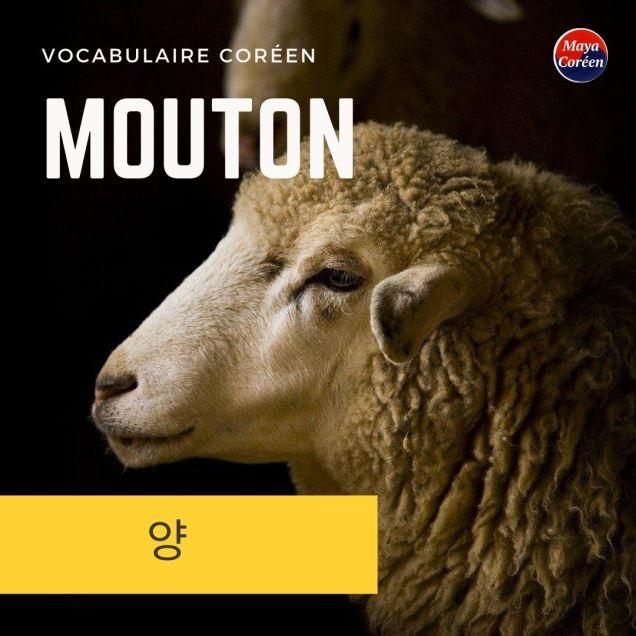 3-mouton
