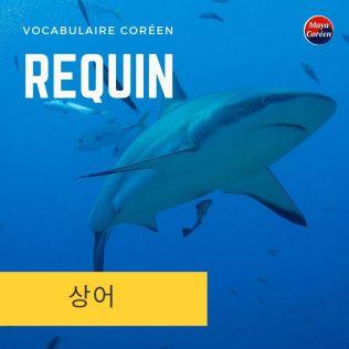 4-requin